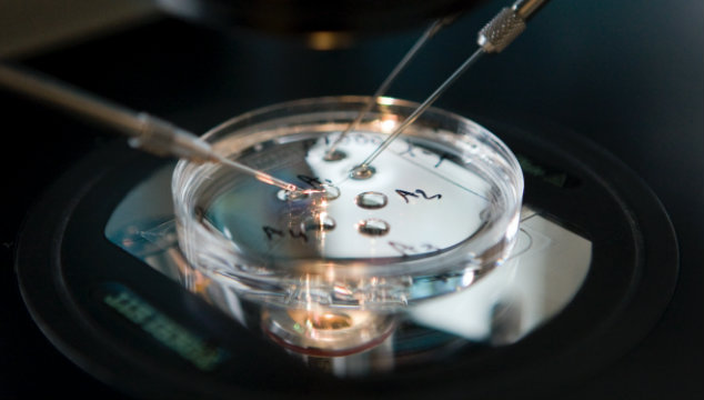 In-Vitro: IVF and IVF Cost