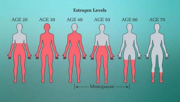 Estrogen and Fertility