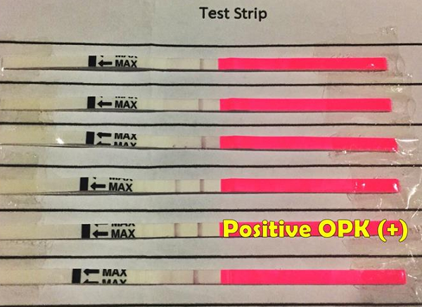 Ovulation Predictor Kit strips